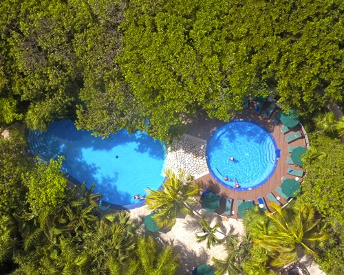 An aerial view of swimming pools with chaise lounge chairs through trees.