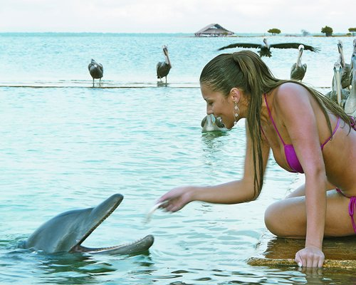 A woman playing with the dolphin at the beach.