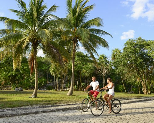 A view of two people riding bicycles alongside coconut trees.