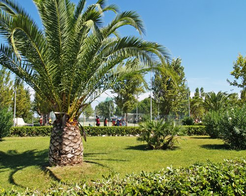 A scenic landscape with palm trees.