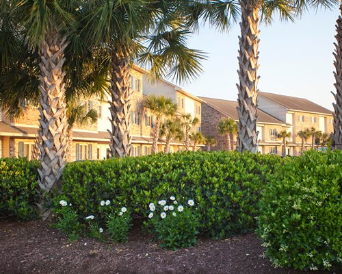 View of flowering shrubs with palm trees alongside resort units.