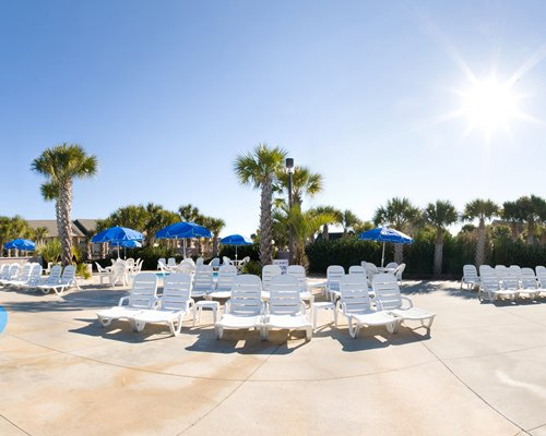 A view of chaise lounge chairs and sunshades surrounded by palm trees.