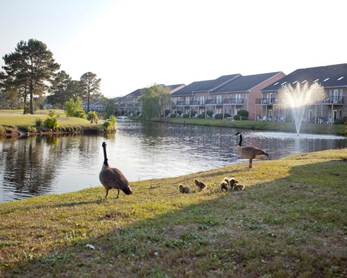Exterior view of Plantation Resort Villas alongside a waterfront with swans.
