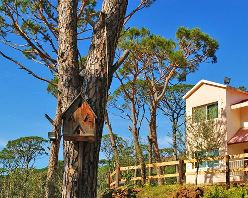 Exterior view of the Pineland Resort and Country Club alongside the woods.