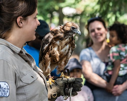 Outdoor activities, bird handler with hawk perched on her glove as guests watch.