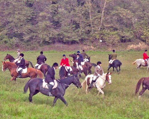 View of people horse riding at a wooded area.
