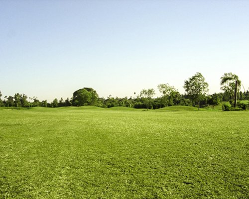 A lawn alongside a wooded area.