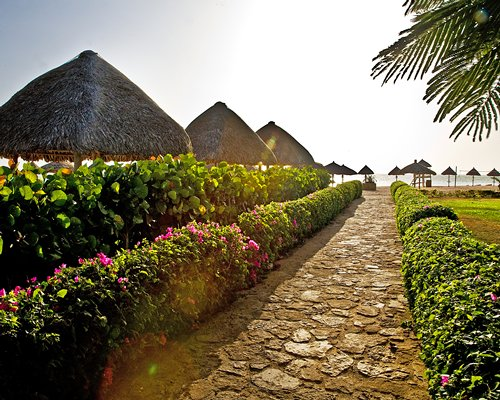 A pathway with flowering shrubs alongside thatched sunshades.