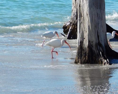 A view of pelican birds on the beach.