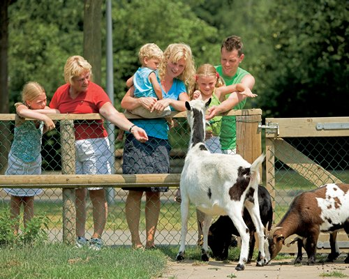 View of people feeding the goats alongside the wooded area.