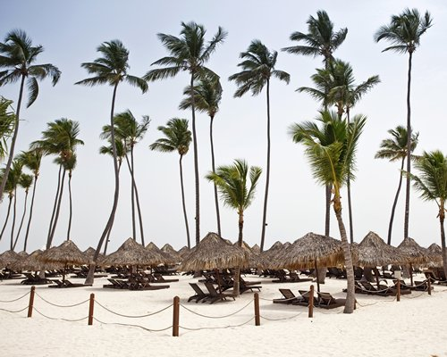 View of thatched sunshades and chaise lounge chairs on the beach with palm trees.