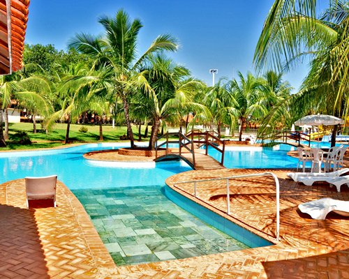 An outdoor swimming pool alongside coconut trees.