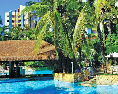 An outdoor pool with coconut trees.