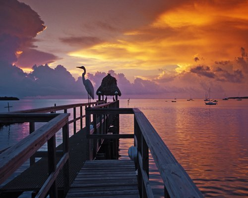 A pelican on a pier at dusk.