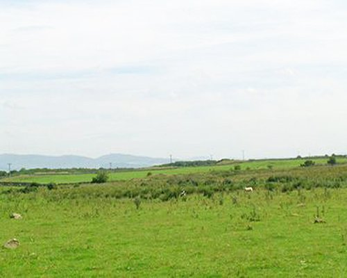 Scenic view of the grassland.