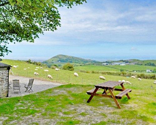 Scenic picnic area alongside a sheep yard.