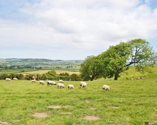 View of sheep in the grassland.
