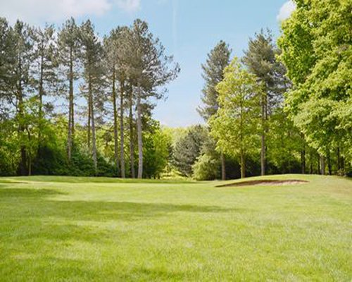A golf course at a wooded area.