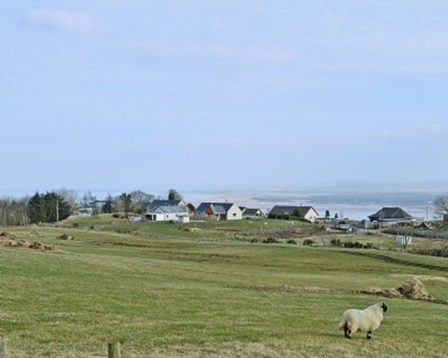 A view of countryside with cottages and sheep.