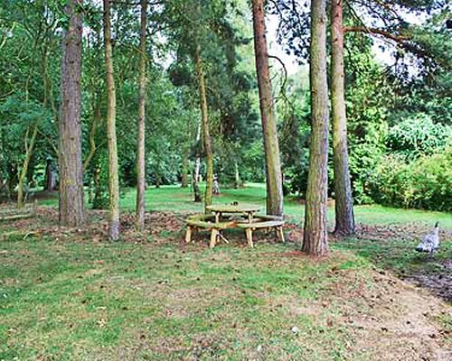 An outdoor picnic area surrounded by trees.