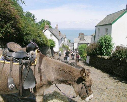 A donkey alongside the resort.