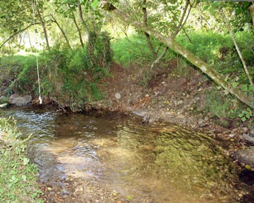 A stream flowing in a wooded area.