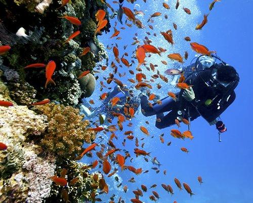 diver and orange fish