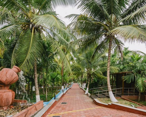 A pathway surrounded by coconut trees.