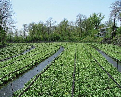 A scenic greenhouse.