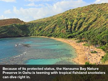 Seven Days on Oahu