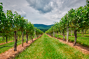 Shenandoah Valley Wine Country