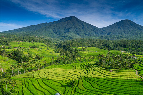 ESCAPE TO THE RICE TERRACES OF JATILUWIH