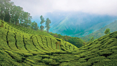 View resorts in Munnar